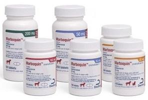 Marboquin-Marbofloxacin Tablet