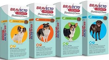 Bravecto 1 month Chew